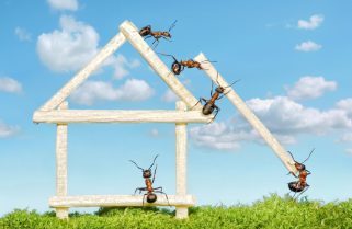 Carpenter Ants Infestation: How to Protect Your Home in Ottawa
